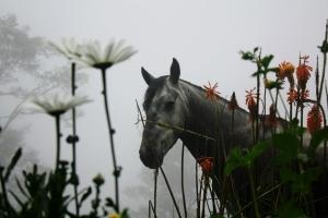 caballo entre flores
