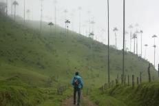 paseo entre palmeras de 60 metros