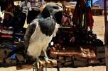 Aguila en cautividad