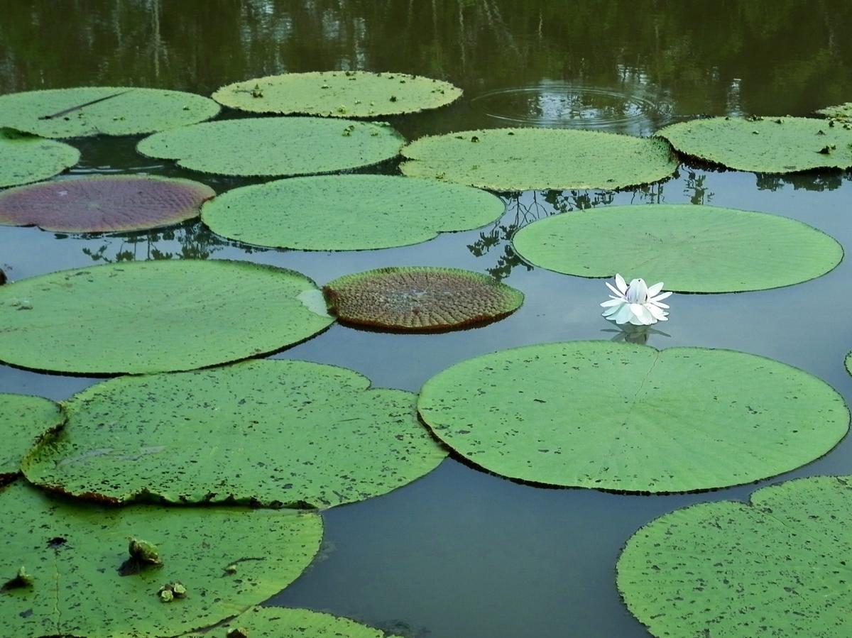 Iquitos y la selva amazónica