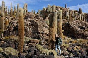 Cactus o cardones gigantes