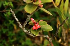Primeras flores prehistóricas en Amboró