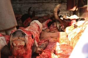 Carnes en el mercado