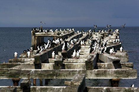 Muelle Punta Arenas