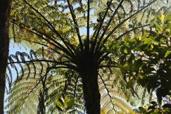 Fern Tree 2