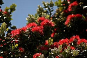 Arbol con rearas flores rojas