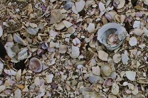 Conchas en Nueva Zelanda
