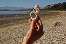 Playa de conchas Motueka