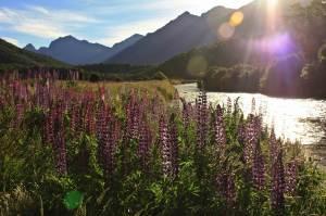 Pradera de Flores Fiorland New Zealand
