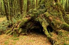 Bosque de las hadas