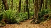 Bosques Te Anau